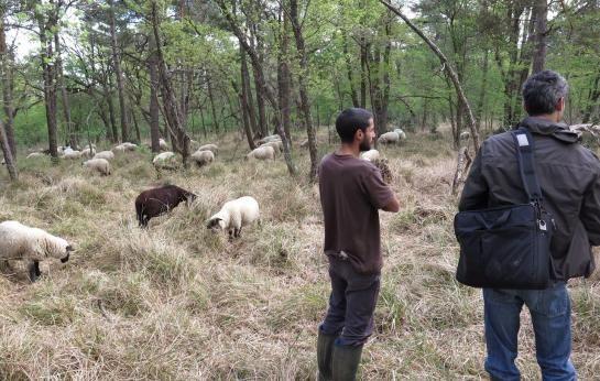 Forêt de fontainebleau, le 28 avril. Alexandre, le berger propriétaire d'un troupeau de 103 brebis, surveille ses bêtes sur le mont Merle, en compagnie d'un vétérinaire de la Maison départementale de l'Élevage.
