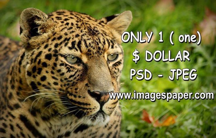 1 psd is only 1 dollar