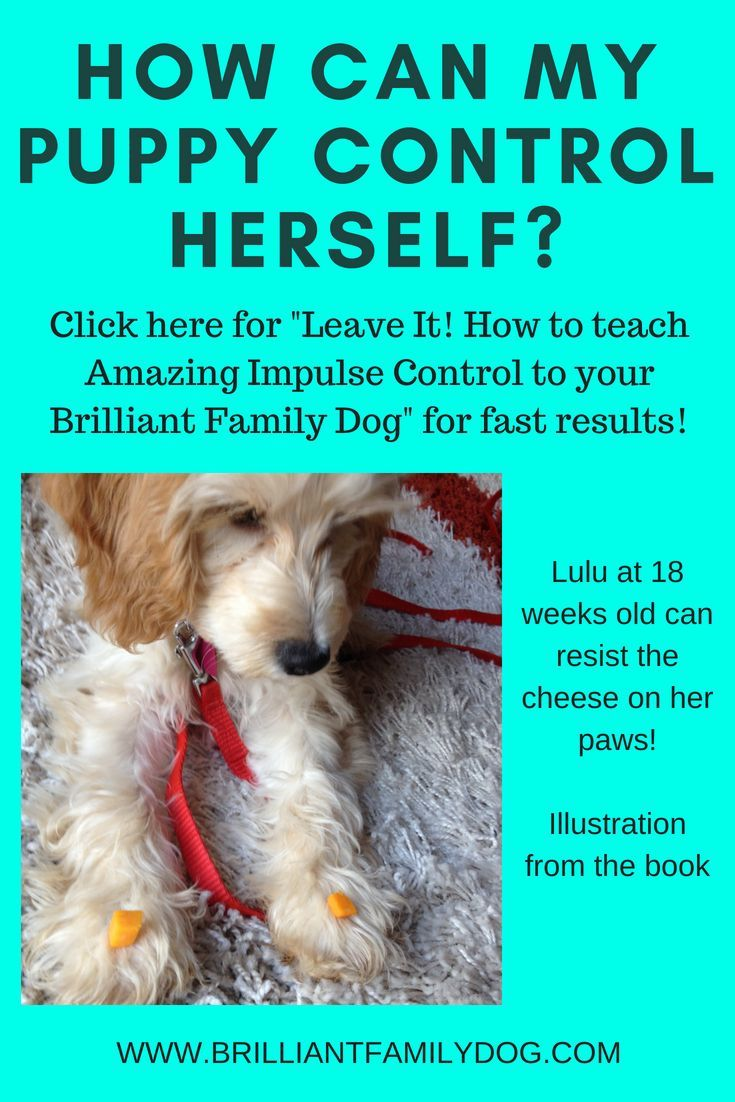 Leave It An Essential Dog Training Skill How To Teach Amazing