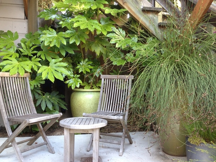 http://tnnursery.net/ - love the plants behind chairs