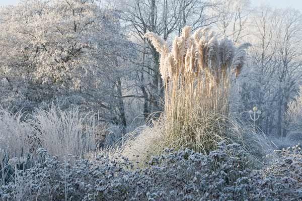 Pin On Winter Garden