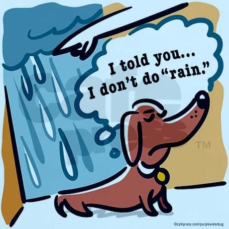 "What is it about rain and Dachshunds? :) Rain is how we got the ""special present"" under the dining room table today... :-/"