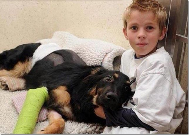 A 7 months old puppy named Geo pushed a 10 year old boy out of the way of oncoming Truck and took the impact himself.