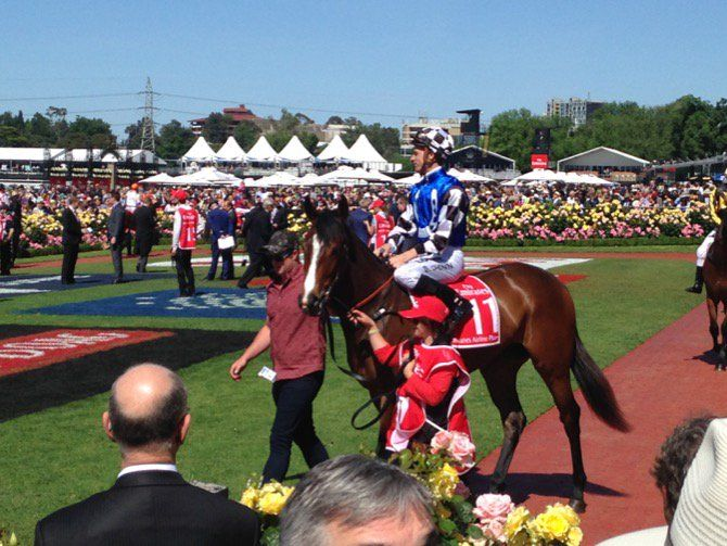 POP in the mounting yard at Flemington, Melbourne Cup Day 3/11/15