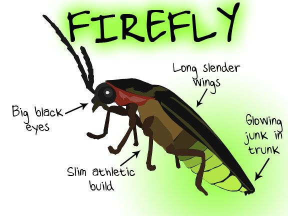 ba520428a0f8cb6be7803fd665e947d2 secret code the secret firefly insect diagram database wiring diagram