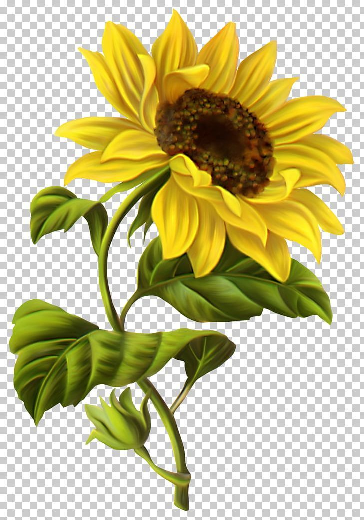 Common Sunflower Drawing Illustration Png Lukisan Bunga Matahari Lukisan Bunga Logo Bunga