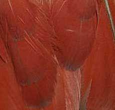 Visual gender determination for African Grey parrots