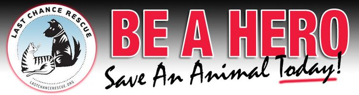 Last Chance Animal Rescue - Howell, Brighton and Flint Michigan