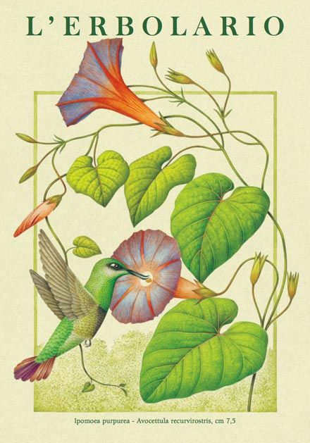 Il Calendario 2012 de L'Erbolario è interamente dedicato ai colibrì, riprodotti negli acquerelli ricchi di particolari di Franco Testa