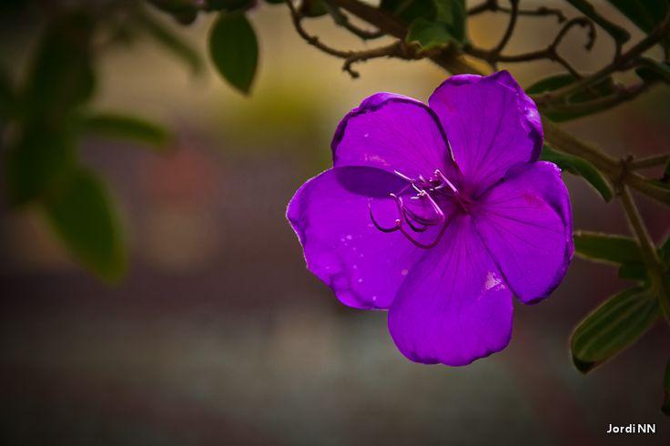 #Flowers // Jordi NN