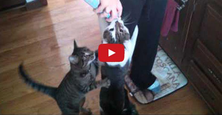 kitten behavior training