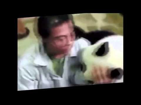 Смешные животные  Смотрите прикольные видео с животными