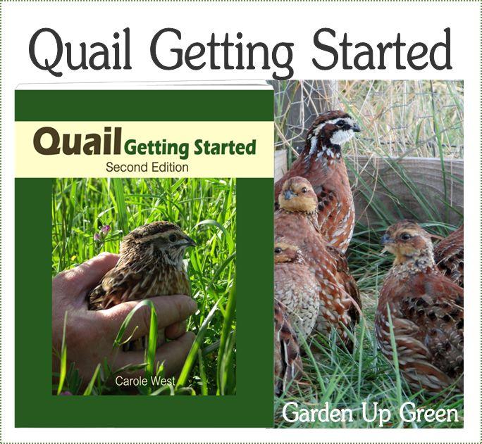 Backyard Quail Production : 1000+ images about Backyard Bantam Fun on Pinterest  Backyard