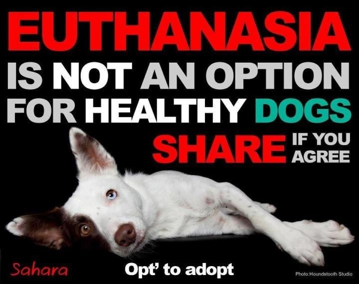 Must Love Dogs Rescue Oklahoma