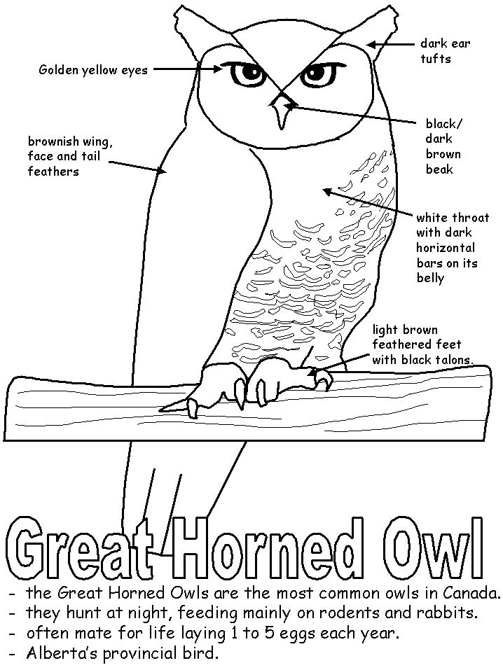 I'll be doing an owl unit this winter!