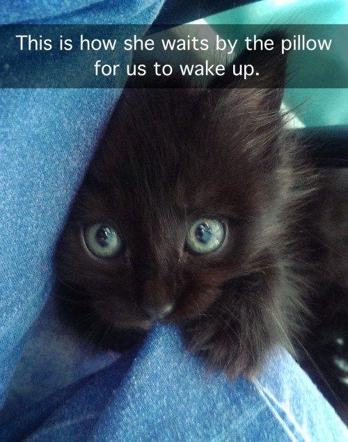 29+ Funniest Cats To Brighten Your Day – Karen McKay