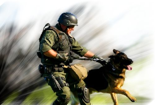 Adlerhorst International, Inc. | Police K-9 Training | Jurupa ...