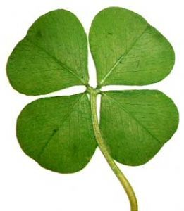 Genuine Lucky Four Leaf Clover(http://www.lucktrader.com 2013)