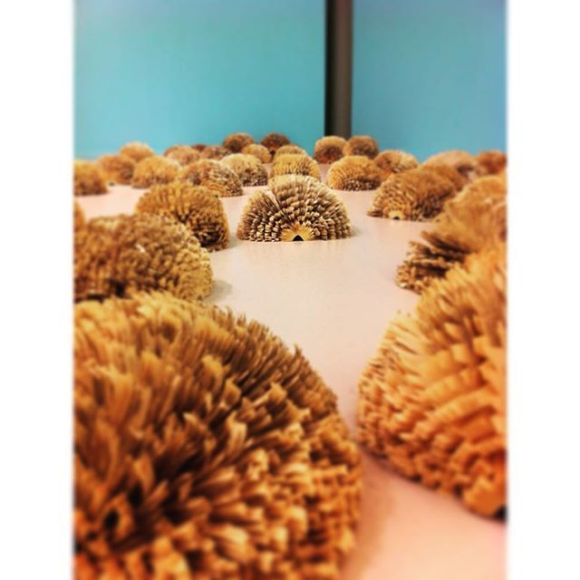 Hedgehogs made of books. So cute  #books #expo #art #paperart #museum #withmom #blur #happy #blue #sweet #bookart #stingy #warm #conceptual #creative #happy #colored #instagood #instamoment #hedgehog #iphoneonly #buddys #iPhoneOnly