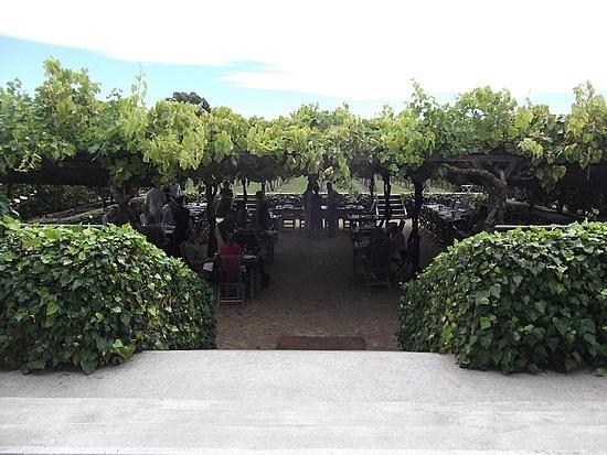 Black Barn Winery - Havelock North