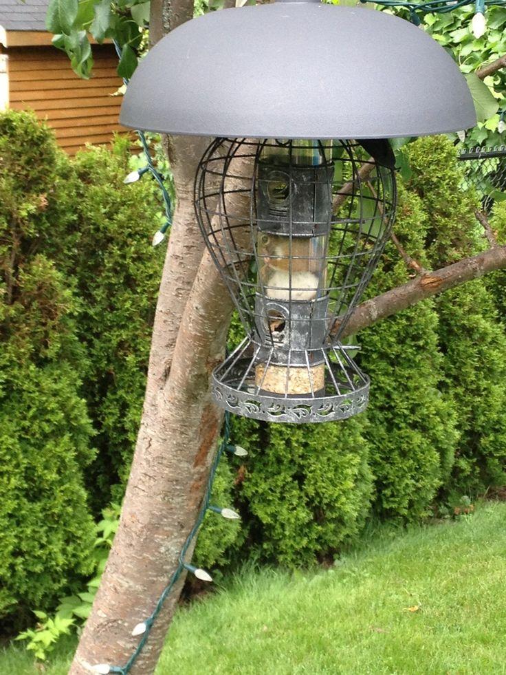 squirrel resistant bird feeders - Squirrel Proof Bird Feeders