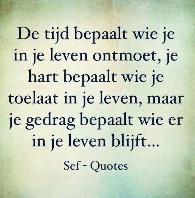 Sef quotes