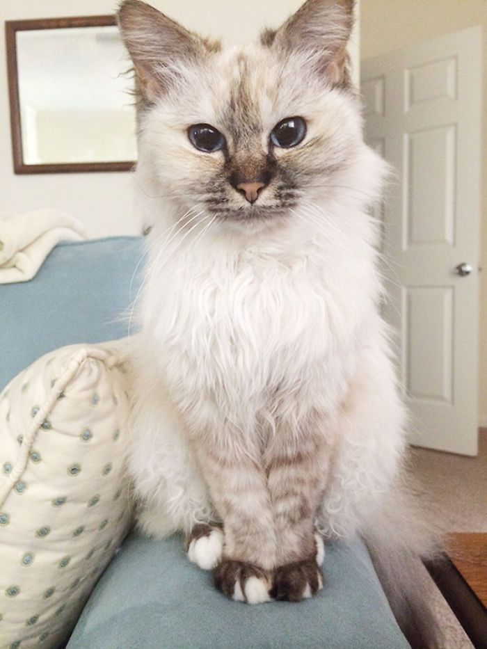 20 Older Cats Getting A Second Chance At Love