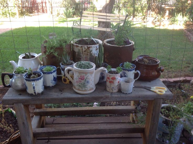 Up cycled coffee mugs that are cracked and chipped with teapots from the op shop. With old paint cans. The plants were cuttings from my neighbour.