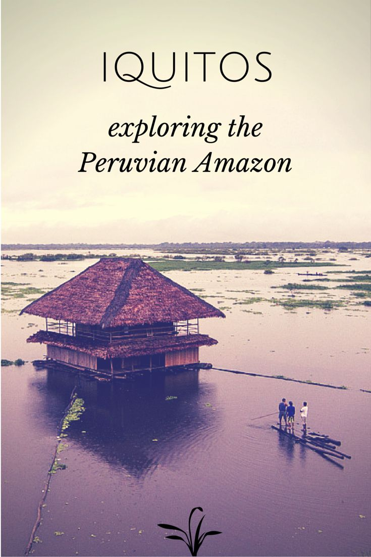 Peru's Amazon basin is one of the most biologically diverse places on the planet. While here you have chance of seeing monkeys, caimans, capybaras, anteaters, and even pink river dolphins. #peru #amazon http://www.anywhereperu.com/destinations/iquitos