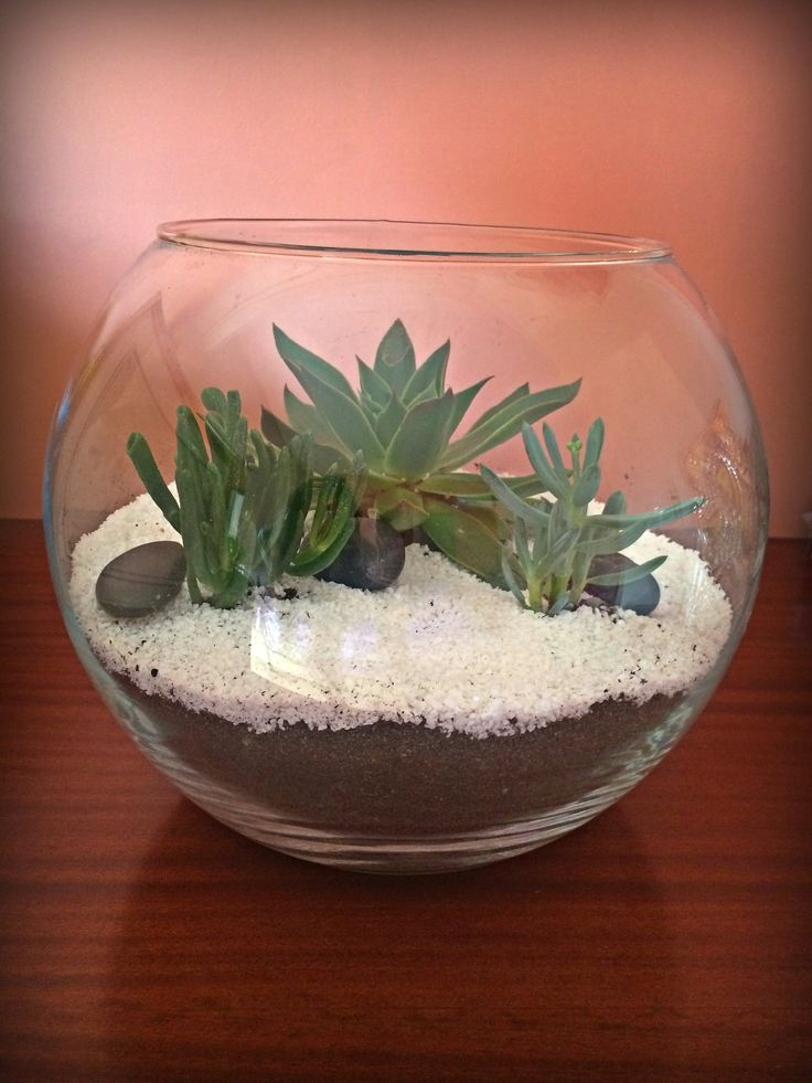 Minimal Terrarium! A Terrarium with simple clean lines and a strong element of the contrast of white sand with coarse black polished pebbles. Ideal for decoration of modern spaces of the house, your work, catering and wedding decoration. DIMENSIONS: MAXIMUM MEAN PERIMETER : 91cm. DIAMETER: 25cm. HEIGHT: 24cm.
