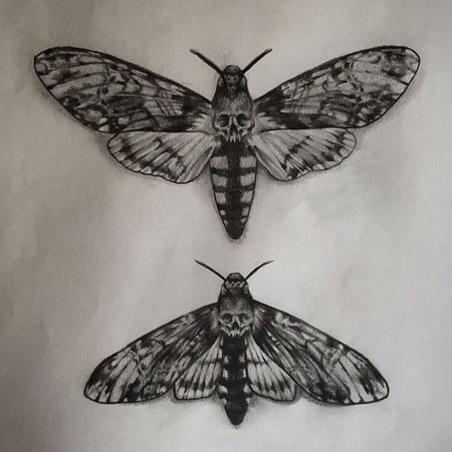 Would love to tattoo the top death moth, the one underneath has already gone…