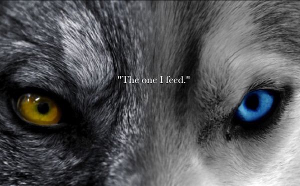 There is a struggle within between two wolves. One is good, one bad. The good…