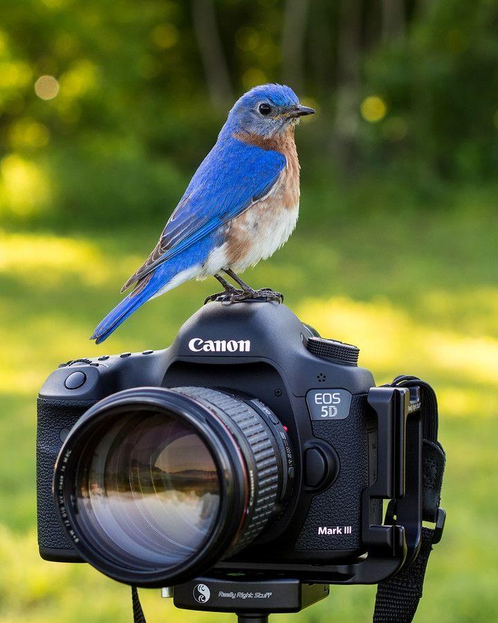 этих подборках камера для фотографирования птичек пока входит
