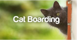 http://www.petstayadvisor.com.au/article/Cat-boarding-and-the-delicate-nature-of-cats