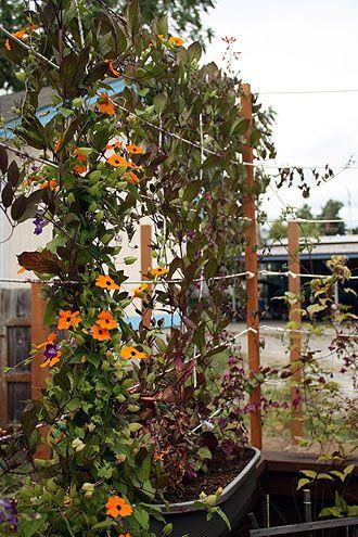 Not Martha: Fenced Yard, Fence Yard, Backyard Gardens