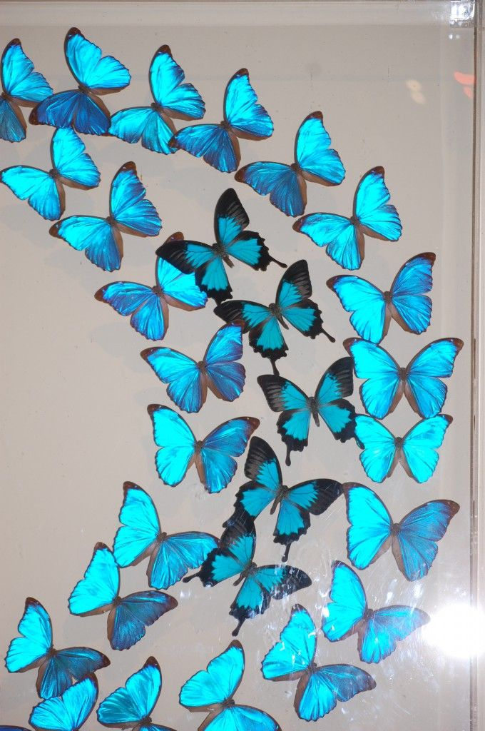 Image detail for -Worlds Most Beautiful Butterflies In One Look - The Wastetime Post