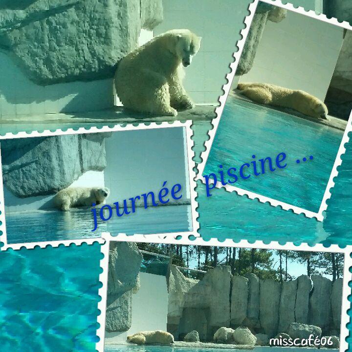 au zoo de la Palmyre en charentes maritimes 17