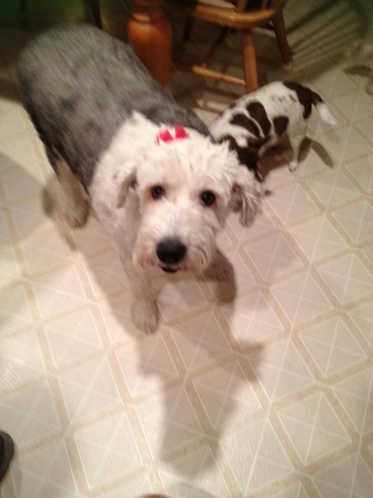 Sadie wanting a snack!
