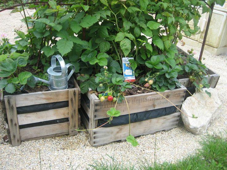 weinkiste pflanzen garten garten terrasse pinterest. Black Bedroom Furniture Sets. Home Design Ideas