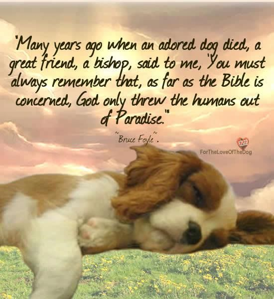 My Best Friend Died Suddenly Quotes: 257 Best Pet Loss Words & Photo's Of Comfort Images On