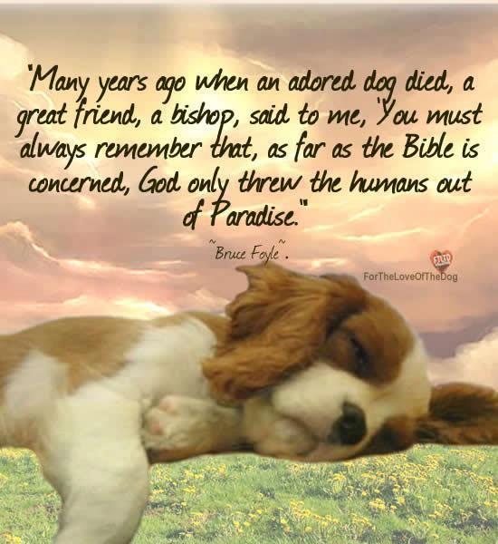 Dog Death Quotes: 358 Best Pet Memories Images On Pinterest