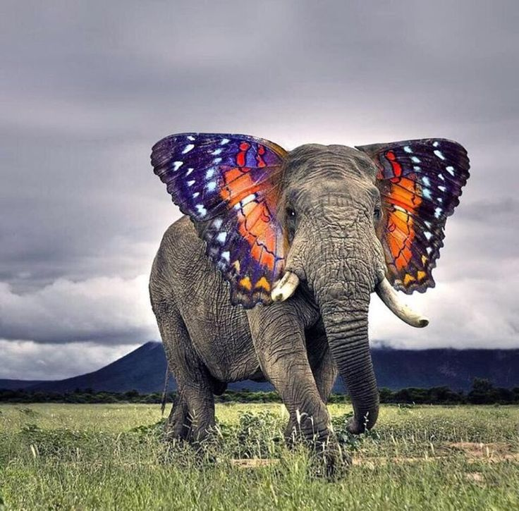 Butterfly Elephant via carousel http://littlebirdexpress.tumblr.com/post/41697544153/the-elephant-the-butterfly-by-e-e-cummings #Elephant #Butterfly