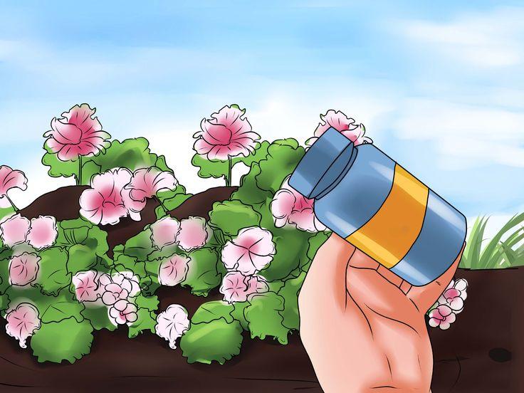 Os gerânios crescem em vermelhos vibrantes, rosas radiantes, brancos brilhantes, roxos revoltos... a lista continua. Não é preciso dizer que são a adição perfeita para qualquer jardim, parapeito ou vaso. Siga estes passos para aprender como...