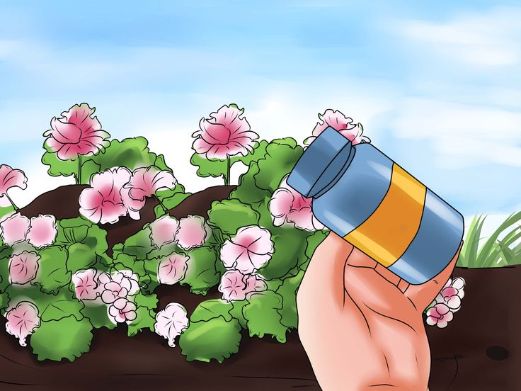 Geraniums grow in riotous reds, pretty pinks, wondrous whites, passionate purples...the list goes on. Needless to say, they are the perfect addition to any garden, windowsill, or pot. Follow these steps to learn how to grow and care for...