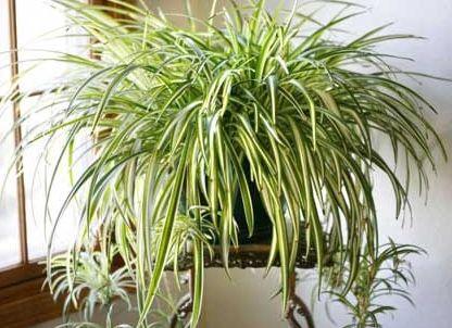 Moje pravdy - 9 nezničitelných pokojových rostlin, které čistí vzduch