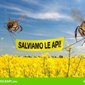 Se vogliamo salvare le api e gli altri insetti, il primo passo è chiedere e ottenere l'eliminazione dei pesticidi killer. Scrivi al Ministro dell'Agricoltura Nunzia De Girolamo