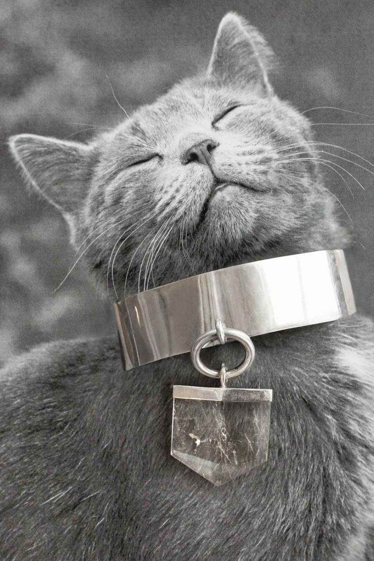 best wishing to love images on pinterest animais animaux and