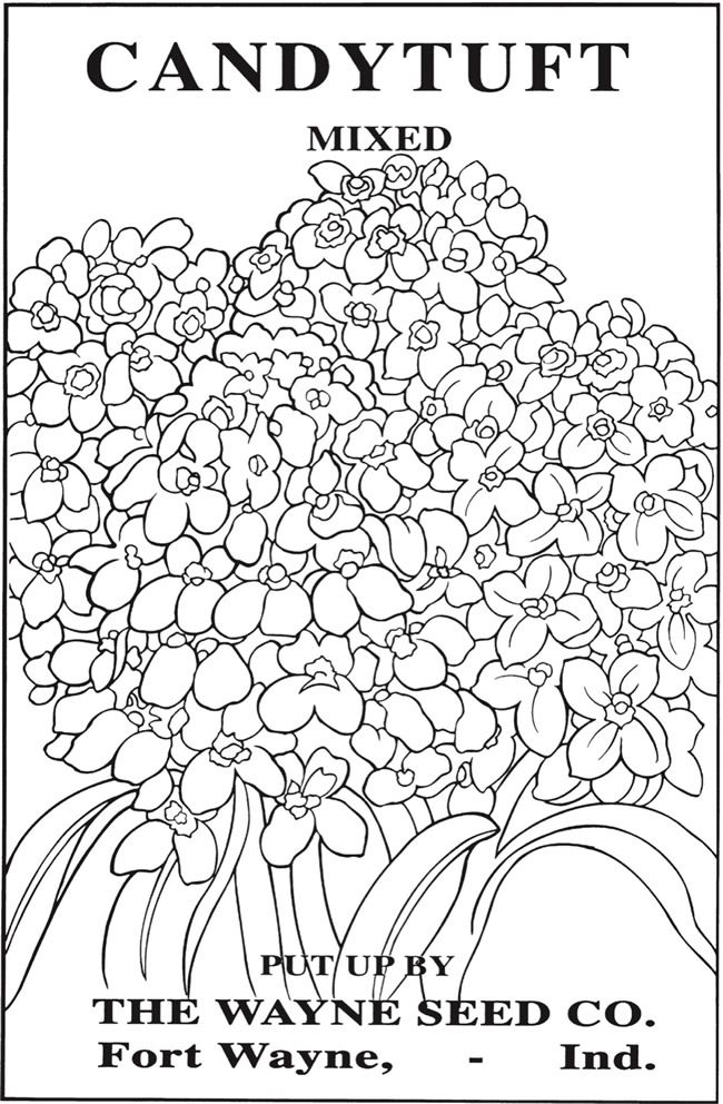 Welcome To Dover Publications Ch Vintage Flower Seed Packets Coloring Books Flower Coloring Pages Coloring Pages