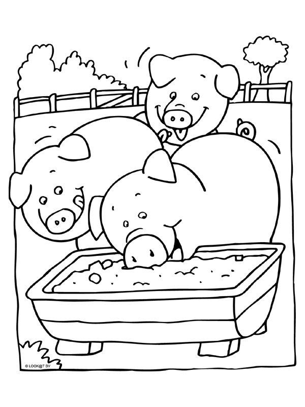* Varkens aan het eten....
