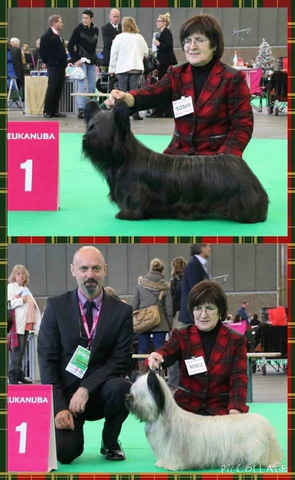 Amsterdam Winner Show 2015 / Best Skye Terriers